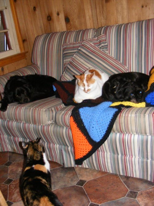 From left to right: Candy, Ziggy, Sadie, and Sasha eyeing an empty spot on the pet couch.