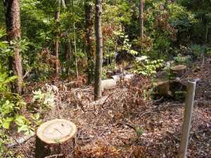 3 bank trees cut