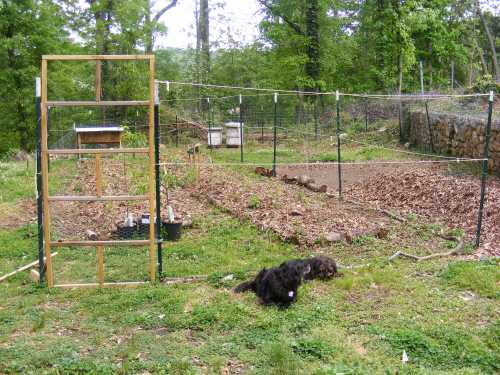 I've built two beds about 30-40 feet long and 4 feet wide.  Candy and Sadie didn't want to miss a photo op!