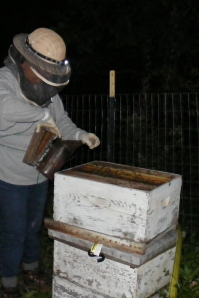 home with bees